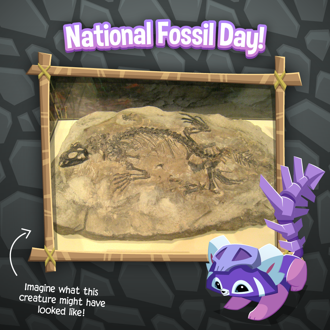 20211113 National Fossil Day-01