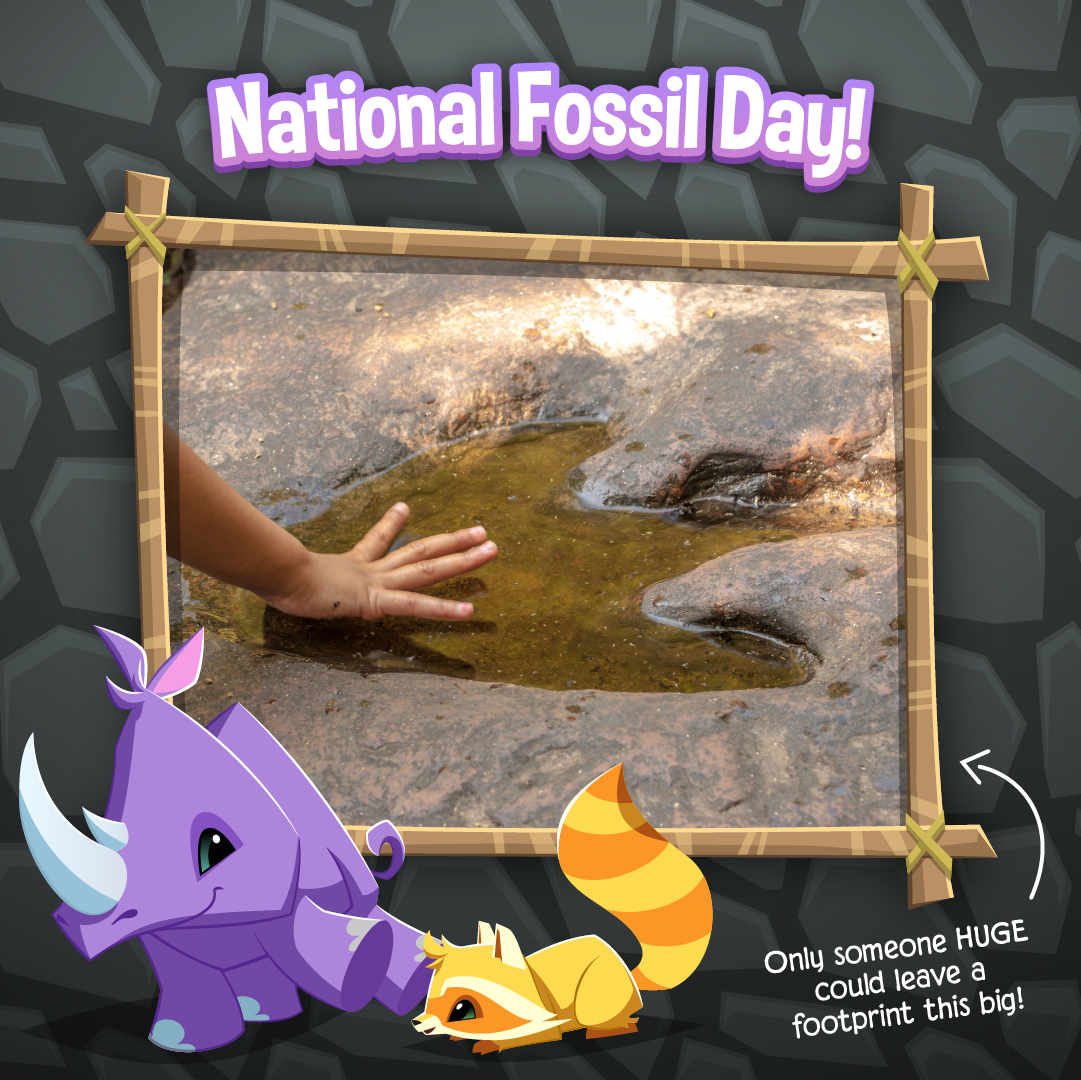 20211113 National Fossil Day-02