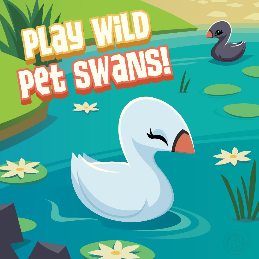 20190129 PW SwanPet-01