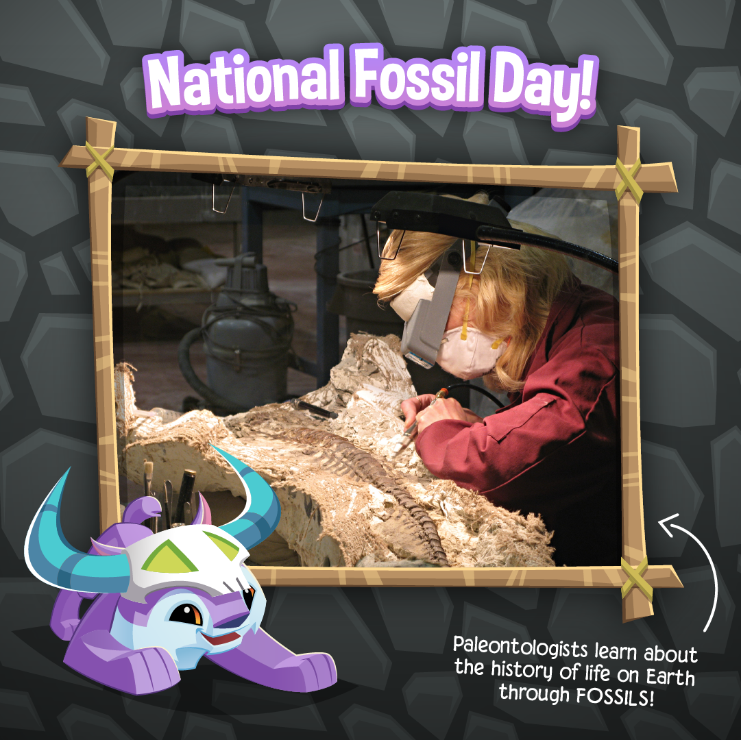 20211113 National Fossil Day-03