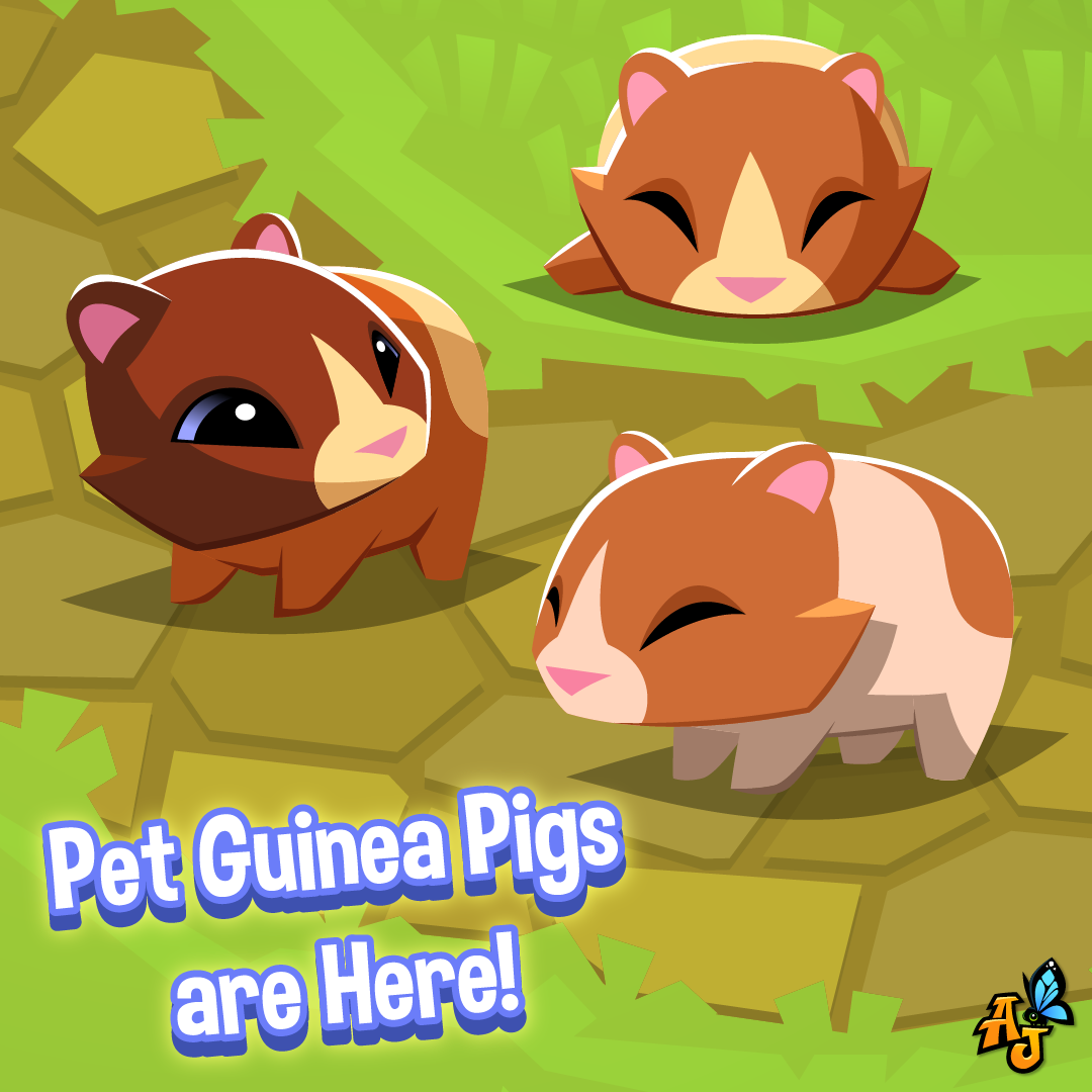 Pet Guinea Pigs Have A Arrived In Animal Jam The Daily Explorer Pet artic foxes are here! pet guinea pigs have a arrived in