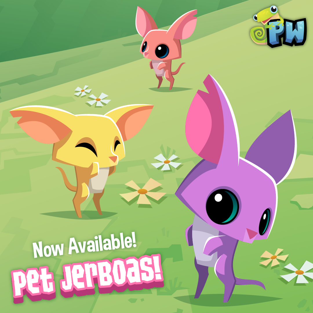 Pet Jerboa-02