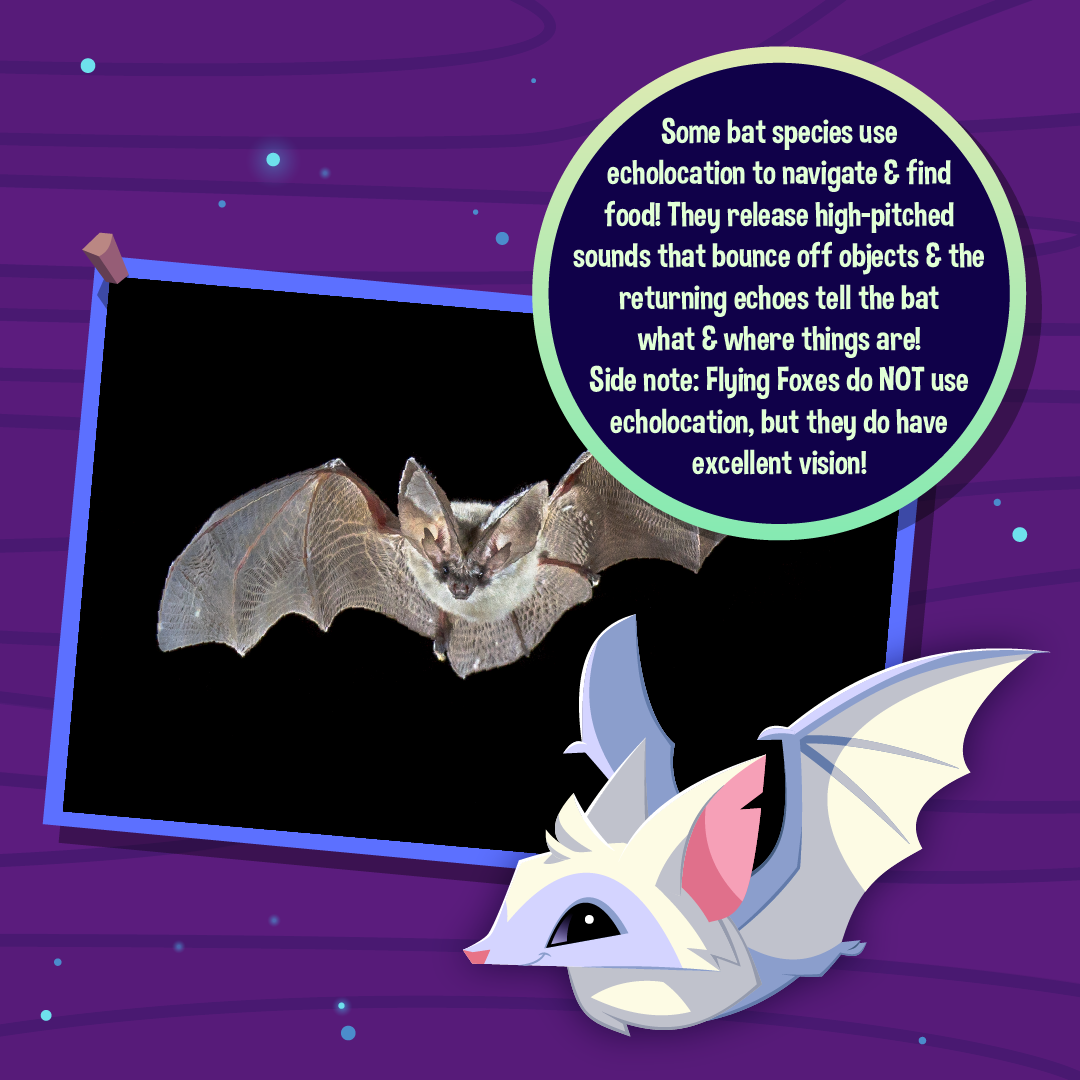 Nocturnal Animals Infographic Bats