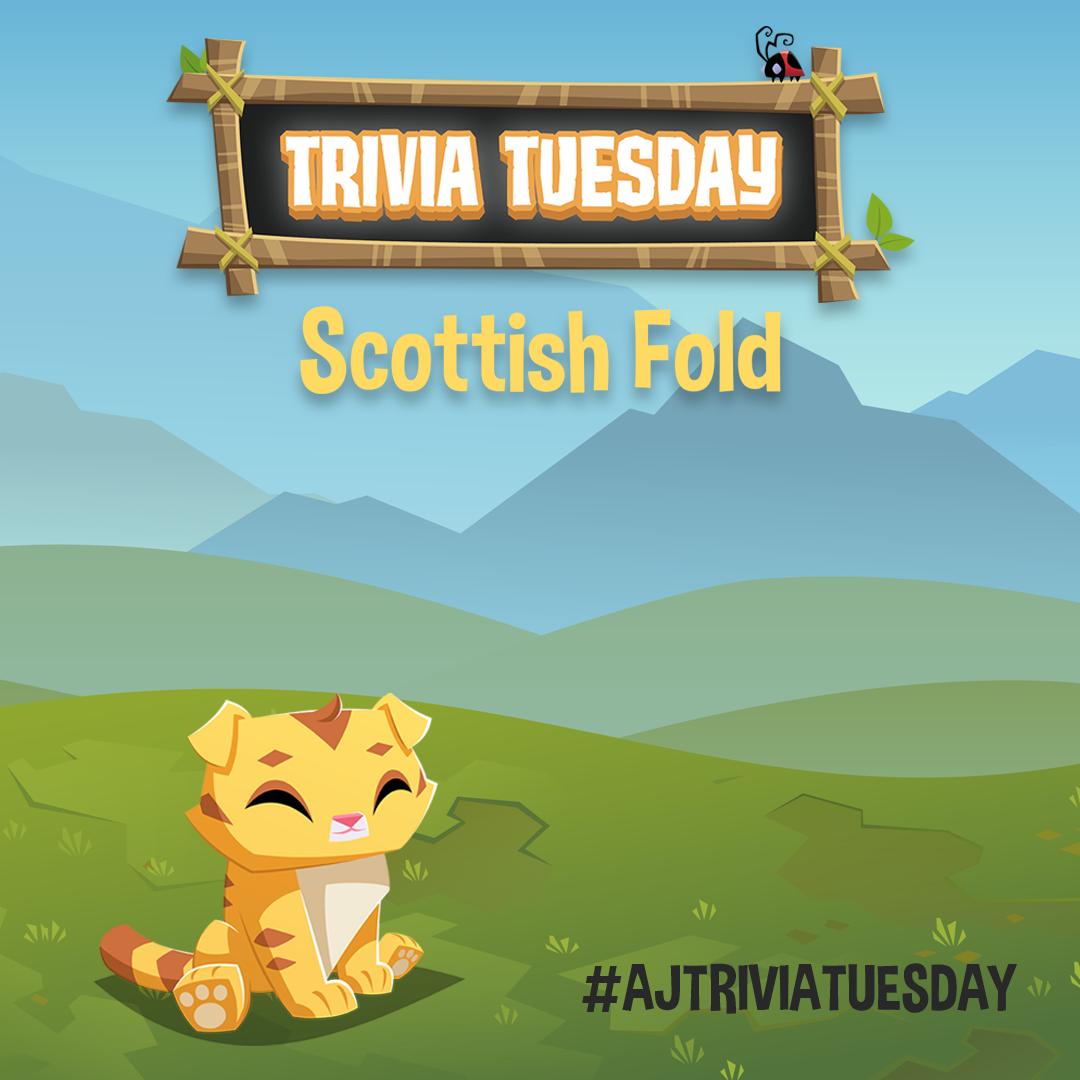 Scottish Fold Trivia