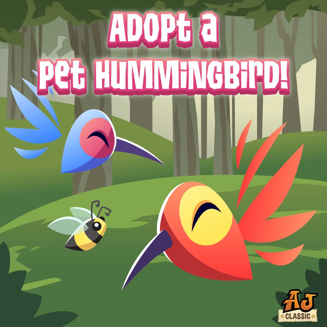 20200904 AJCAdoptaPetHummingbird-01 (1)