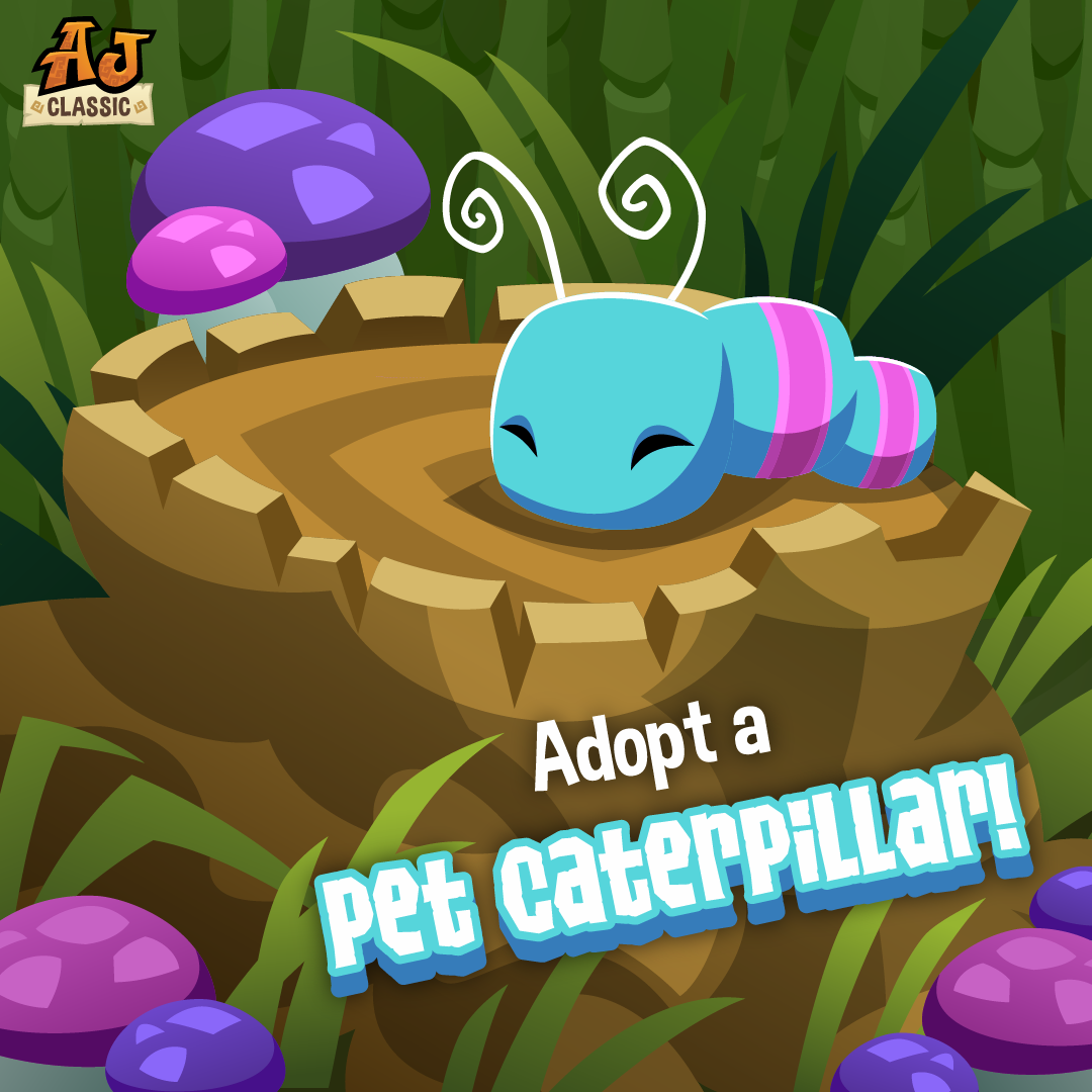 20200618 AJC Pet Caterpillar-01